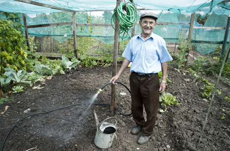 Allotment in Brent